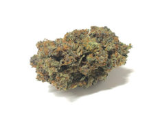 california-haze-marijuana-cannabis-fleur-de-cbd