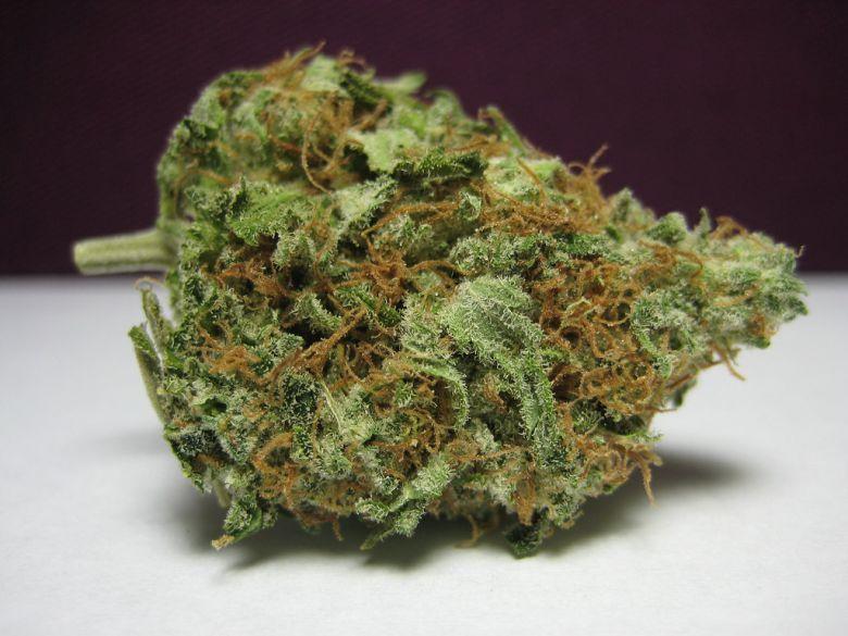 white widow concentrations élevées de THC, ou métabolite psychoactif du cannabis