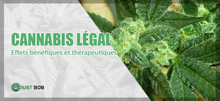 Effets bénéfiques et thérapeutiques marijuana legal