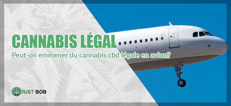 cannabis cbd en avion