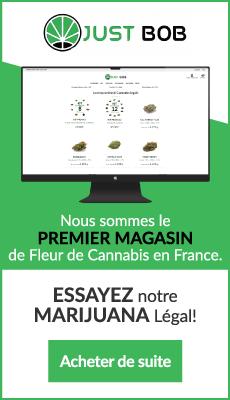 fleur-de-cannabis-cbd-france-marijuana-cbd