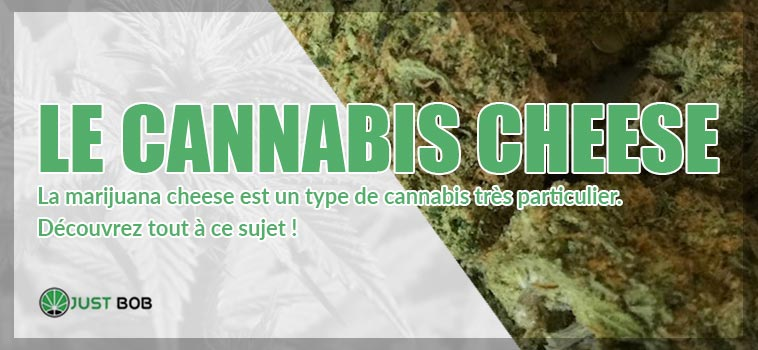 le cannabis cheese