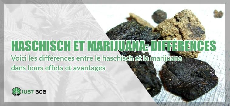Haschisch marijuana différences