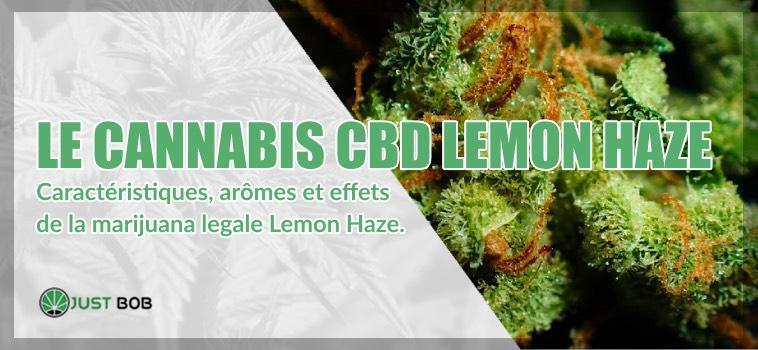 cannabis CBD Lemon Haze Caractéristiques
