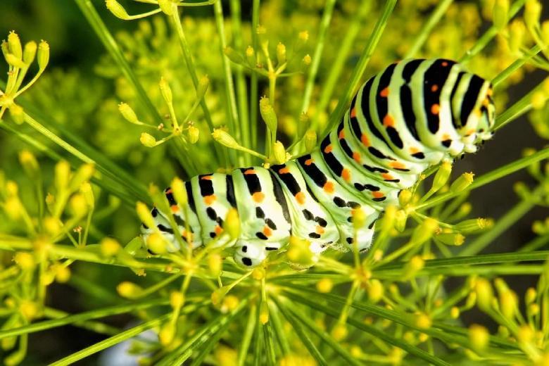 plantes de cannabis hiver et parasites