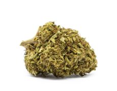 orange bud fleur de cannabis