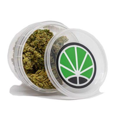 bubblegum cannabis cbd