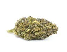 Purple Haze Fleur de CBD